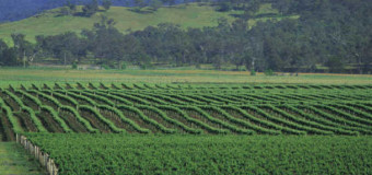 About Wine from Oz, Lawn Mowers and Mac Nuts