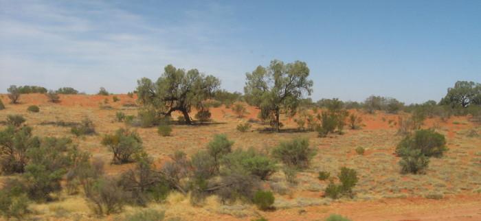 5-terrain