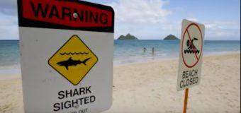 Shark Attacks Need Perspective.