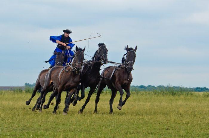 five-horses